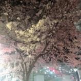 『夜桜で乾杯』の画像