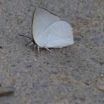 ちょっとだけ不思議な昆虫の世界(3)