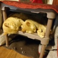 【画像】猫カフェに居る