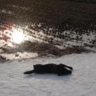 『ヒロの雪遊び』の画像