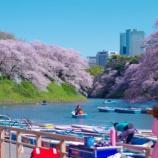 『千鳥ヶ淵・ボートから桜を眺める』の画像