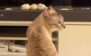 &Cat家の日常