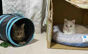 猫それぞれの
