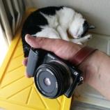 『Neewer 28mm F2.8 NEXにフィットするMFパンケーキレンズ:実写編�』の画像