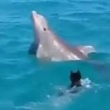 『イルカと遊ぼう!♡』の画像