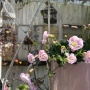 *暖かい!レイニーブルーが咲いた(゚ロ゚)&使い捨てマスクを洗う