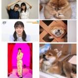『【写真多数あり】これは永久保存版www『柴田柚菜と柴犬』完全一致wwwwww【乃木坂46】』の画像
