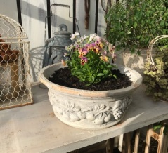 *花に似合う鉢を選ぶのも楽しい作業の一つです(*^▽^*)