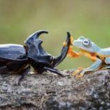 【朗報】カエルさん、人間の見てないところでとんでもない事をしていた・・・