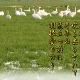 『フォト短歌「冬草の」』の画像