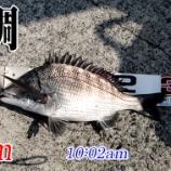 『グゥフゥとバァサァに泣く!山口県柳井市の黒鯛(チヌ)釣り #038』の画像