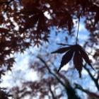 『成田山新勝寺に行ってきました その2 自然編』の画像