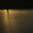 『【鳥】朝方の鳥たち【写真あり】』の画像
