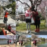 『春~桜満開!お花見いつ行くの?今でしょ(古ッ)!』の画像