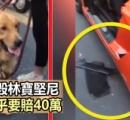 飼い犬が8億円のランボルギーニを破壊してしまう。飼い主に73万円の修理費請求