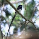 青色鳥撮り