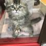 大麻店 犬猫生体コーナー🐱☀️