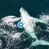 『クジラたちの挨拶 ♡』の画像