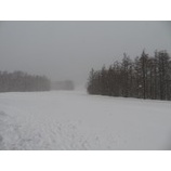 『沢山雪が積もりました。パウダー楽しめます!』の画像