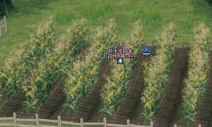 彡(^)(^)「小麦畑で使うイェラの特別な鎌、トウモロコシ畑で使ったろ!」