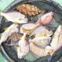 沖が荒れたら湾内ハイカラ釣り!84cm/5.9kgの大真鯛も!