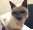 猫のScooterさん(30歳)、ギネスに現在最長寿の猫と認定される