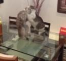 【頃す気マンマンワロタw】 ネコが喧嘩相手をキャメルクラッチ → そのまま後頭部から床に叩きつける