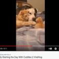 犬が子猫を見つめているとママ猫がやってきて…優しい3匹の抱擁(動画)