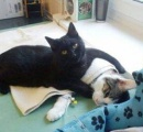 添い寝してくれる 癒しの「ナース猫」