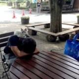 子猫レオンの旅行記6!望郷の湯で温泉待ちニャ!のサムネイル