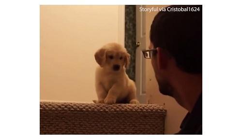 【萌え注意】 階段を降りられない子犬が飼い主の機転でできるまでの動画が可愛いと世界中で話題に