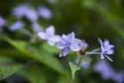 毎週山に登ってるからこの夏に山で撮り溜めた花と虫の写真をひたすら貼っていく