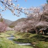 『観音寺川の桜』の画像