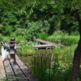 『虫獲り;東大和市中心(トンボ池・都立狭山公園)』の画像