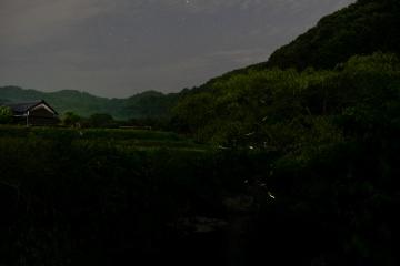 明日香の蛍【2018】