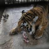 『助かった動物たち:ガザ地区続報』の画像