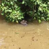 『米国ルイジアナ州の大洪水』の画像