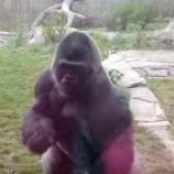 『以心伝心:ガラス越しに訴える動物たち』の画像