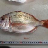 『国東の食環境(325)鯛』の画像