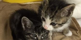 【馴れ初め】アパートのゴミ捨て場で拾った二匹の赤ちゃん猫。里親募集に連絡をくれた女性が運命の人だった!