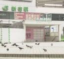 新宿駅前が、鳩さん天国