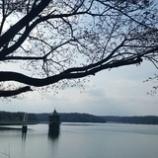 『狭山湖のさくらは』の画像