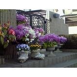 『春は花盛り』の画像