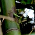 【画像】僕が撮影したカマキリ、ガチでプロレベルwww。