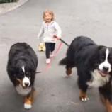 『犬のお散歩』の画像