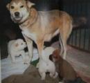 中越地震で子犬を守りながら飼い主を待った、「マリ」天国へ