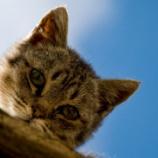 『猫とかいう謎の生物』の画像