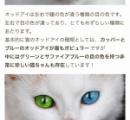 とんでもない目の色の猫が発見される
