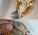 【画像】南極海の水深520~670メートルで発見された新種の深海魚がキモすぎるωωωωωω