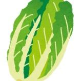 『【悲報】白菜、煮るしかない』の画像